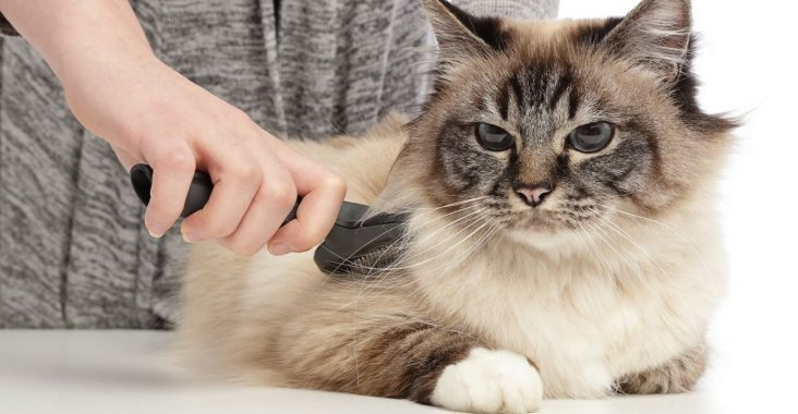 Best Brush for Long Hair Cats