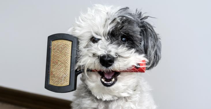 Best Brush for Long Hair Dogs