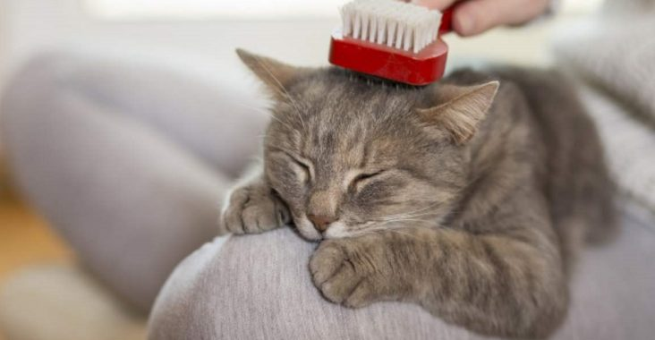 Best Cat Brush for Shedding Short Hair
