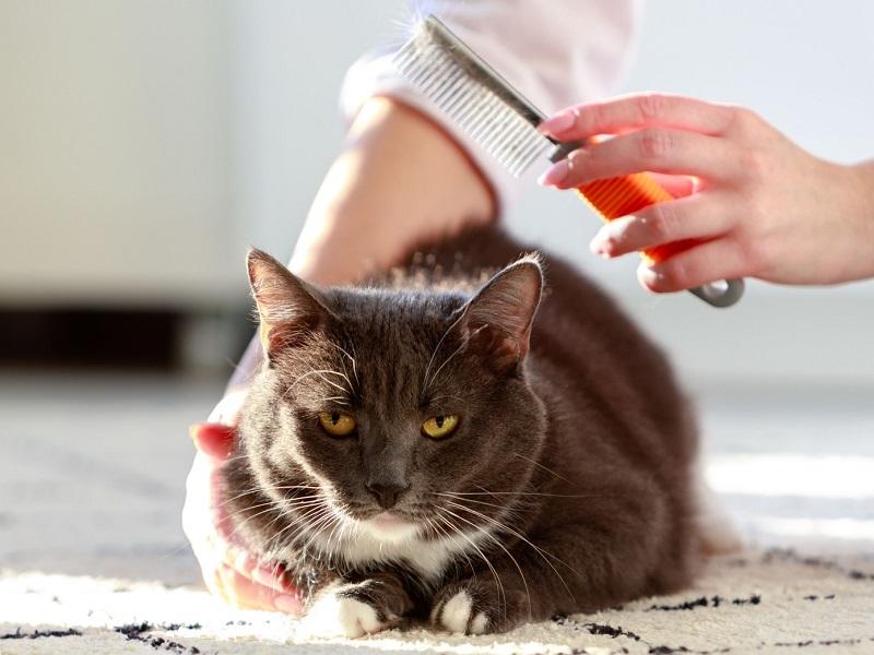 cat brush for shedding short hair