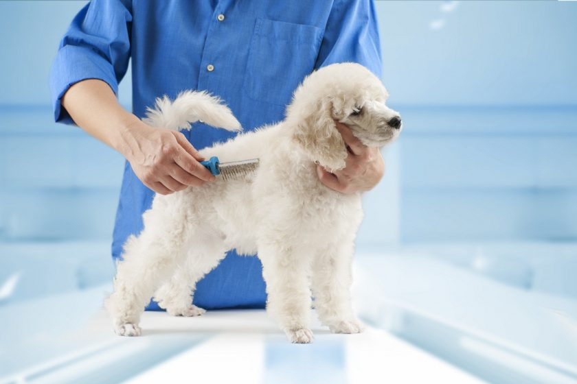 best brush for poodle hair